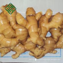 chinesischer Ingwer gelb 250g frischer Ingwer Spezifikation