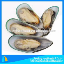 promotion different size of frozen half shell mussel with low price