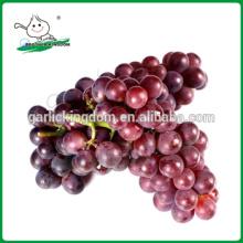 Vendemos Uvas Rojas / Uvas / Uvas frescas de China