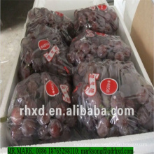 import china products red globe seedless grapes
