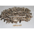 New Crop Good Price Sonnenblumenkerne 5009