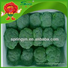 Meilleur fournisseur européen de brocolis vert du Yunnan