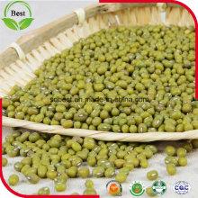 3,2 milímetros Sprouting feijão verde Mung