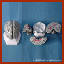 Human Anatomy Grey Brain Model (3 PCS) Medical Products