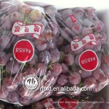 red globe grape 6-7 individual bags or in bulk