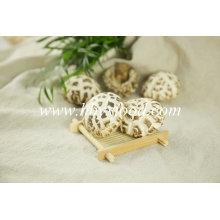 Cogumelo Shiitake de flor branca de corte seco em massa