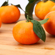 Best Quality for Organic Navel Oranges Top orange county doctors export to Anguilla Importers