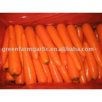 Usine de carottes fraîches