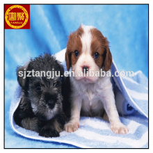 Microfiber Pet Drying Towel,New To The Range Microfiber Pet Drying Towel,New To The Range