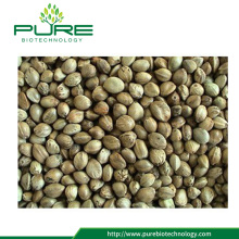 Hot-selling Bulk Industrial Hemp Seeds