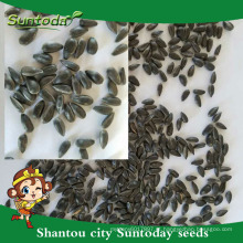 Suntoday comestível e não comestível hs código sementes vegetais nomes vegetais internacionais sementes de girassol orgânicas (91002)