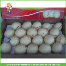 Hot Sale Chinese Fruit Best Supplier Sweet Botou Fresh Ya Pear