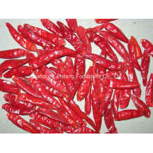 New Crop Dried Red Chilli