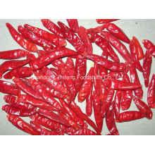 Nuevo Chili Rojo Deshidratado