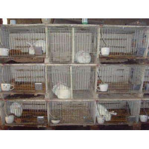 High quality rabbit farming equipment