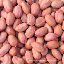 Kernals d'arachide de forme longue avec la peau rouge
