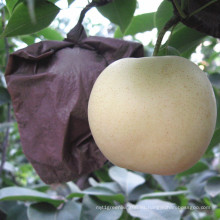 Pera de oro fresca de alta calidad / corona pera