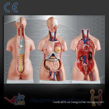 Torso humano unisex 85CM (23parts), modelo de enseñanza