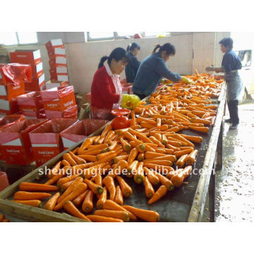 Hot products Fresh carrot carota