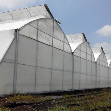 6m/8m/10m Large Multi span  Film Greenhouse
