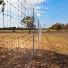 Hot Sale High Quality  Ganvanized Field Fence