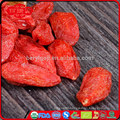 gojiberry from our own organic goji farm