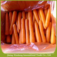 Cenoura fresca saudável de origem chinesa