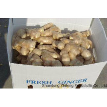 Fresh Ginger with High Exporting Standard