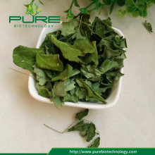 Best Quality Moringa Leaves with lower price