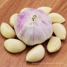 Proporcione ajo blanco pelado fresco