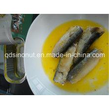 Konservierte Sardine in 100% Öl