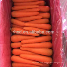 fresh preserved carrots