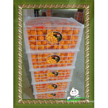 Свежий апельсин раннего созревания в пластиковой коробке