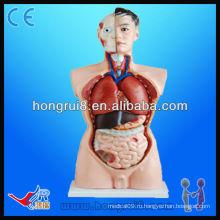 Продвинутая высококачественная медицинская модель туловища 85см, образовательная модель 19 частей Модель туловища