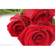 Vente chaude 100% naturel Rose PE