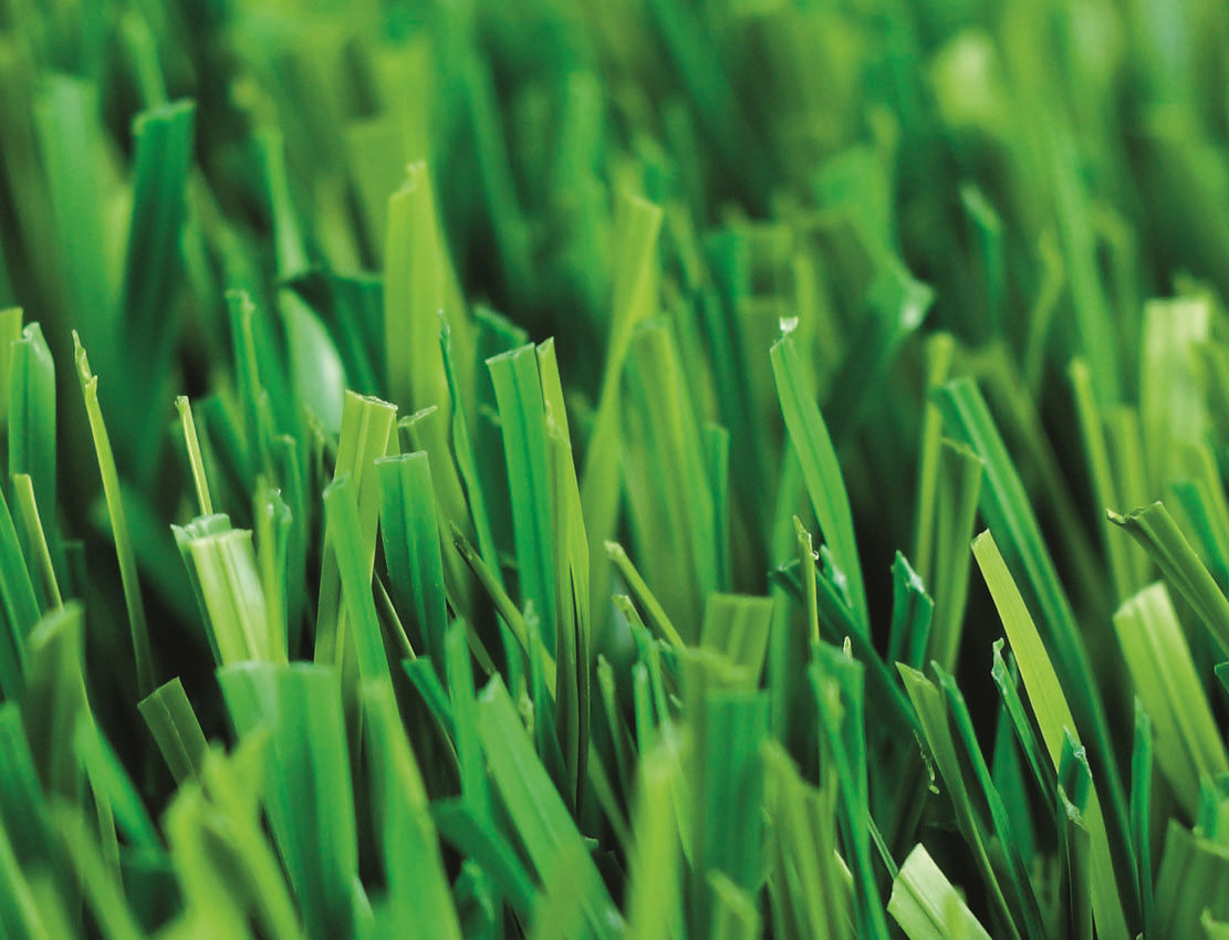 Sport Grass