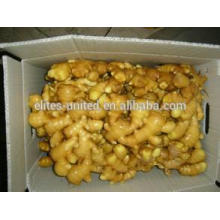 Fresh Ginger Manufacturer From China