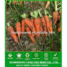 Precio de las semillas de zanahoria de NCA08 Chaduo, manufactura de las semillas