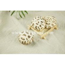 Cogumelos Mágicos Flor Branca Vegetal Seco