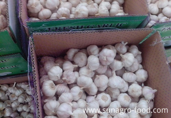 Fresh Garlic In Cartons