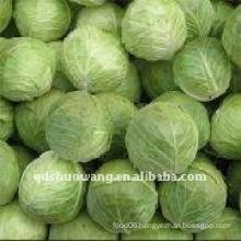 2011 fresh round cabbage