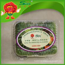 Frisches Gemüse Bio Baby Gurke