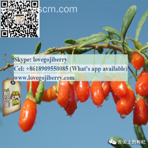 PRODUK CARE HEALTHY CHINESE ORIGIN GOJI TEA