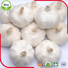 4.5 ~ 6.0 Cm Fresh Pure White Garlic