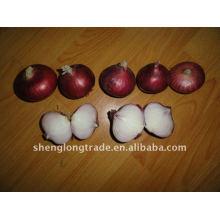 cebola cebola vermelha fresca chinesa