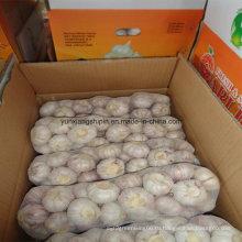 Чистый белый чеснок высокого качества из Китая