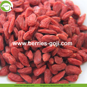 Acheter Fruit Naturel Anti Cancer Lycium Chinensis