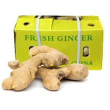 Chinese No Pesticide Fresh Yellow Washed Organic Ginger