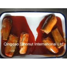 Maquereau en conserve en sauce tomate (HACCP, ISO, BRC, FDA, etc.)