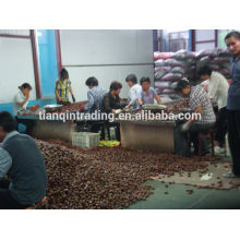 Chinese chestnut exporter